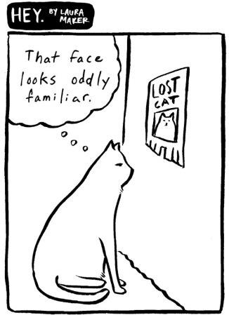 2015-11-lostcat